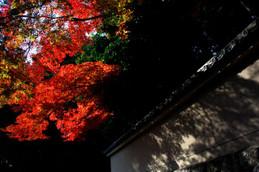 紅葉の大徳寺