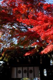 紅葉の今宮神社