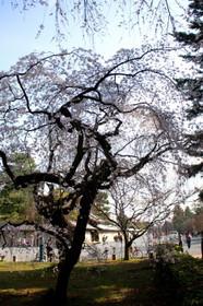 京都御苑 乾御門