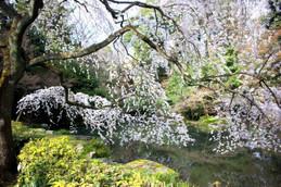 京都御苑 近衛池