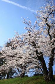 Kamogawa0403_06