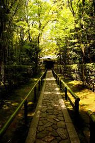 そうだ京都行こうと同じアングルの高桐院