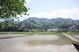 福井県永平寺町の田園風景