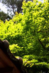常照皇寺のあざやかな緑