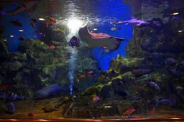 魚っ知館大水槽
