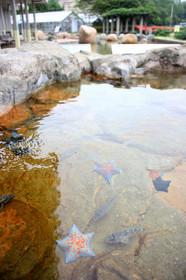 魚っ知館のタッチングプール