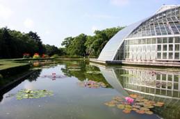 2014年夏・早朝の京都府立植物園ハス池