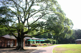 早朝の京都府立植物園