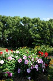2014年早朝開園の京都府立植物園Soutyoukaien11