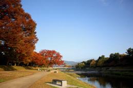 11月の賀茂川・北山大橋付近