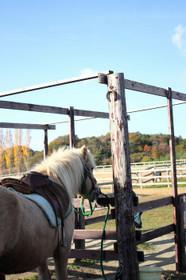 ブルーメの丘・乗馬