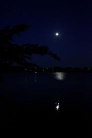 月夜の広沢池