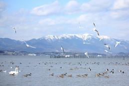 湖岸緑地の水鳥たち
