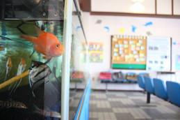 栗田駅魚魚駅舎(ととすて~しょん)の魚