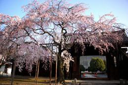 早朝の妙覚寺