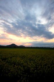 近江八幡の田園にて