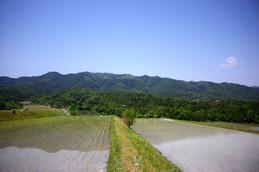 伊香立南庄町付近の田園