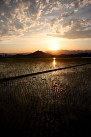 近江八幡の田園