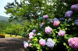舞鶴自然文化園アジサイ園入口付近