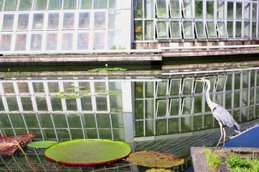 観覧温室前の池