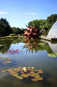 早朝開園の京都府立植物園