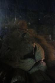 夜間開園の京都市動物園もうじゅうワールド