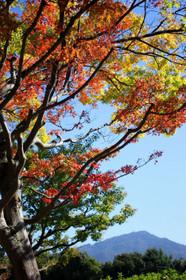 ほのかに秋色の国際会館・グランドプリンスホテル京都前の道