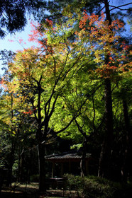 ほのかに秋色の宝ヶ池公園