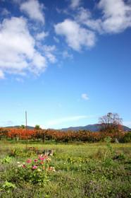 高島市今津町深清水の風景Imazu10