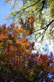 上賀茂橋付近の紅葉