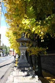 今宮門前通りの銀杏並木