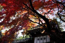 今宮神社東門の紅葉