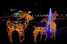 京都府立植物園のクリスマスイルミネーション