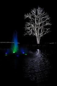 京都府立植物園トウカエデのイルミネーション