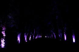 くすのき並木のライトアップ