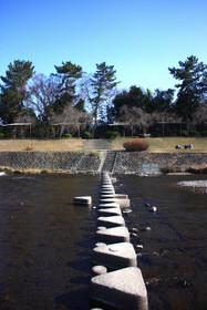 冬の賀茂川・北大路~北山間の飛び石
