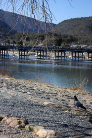 鳩と渡月橋その2