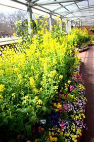 開催中の「早春の草花展」