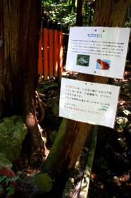大田神社境内タゴガエルがここにいる?