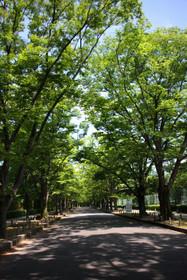 Natsusyokubutsu01