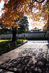 秋色の妙覚寺大門しだれ桜