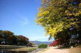 北山大橋から賀茂川東岸を歩く