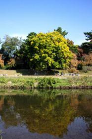 秋の「半木の道」