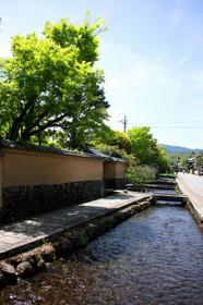 新緑の上賀茂神社2017