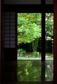 京都御苑 閑院宮邸跡の床みどり