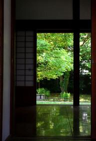 黒い床板に美しく映える閑院邸跡の「床みどり」