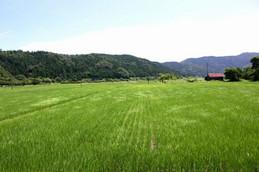 余呉駅前の田園