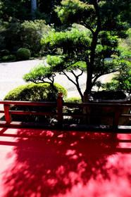 曼殊院の書院から見る庭園
