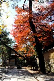 2017年京都 名残りの紅葉・大徳寺