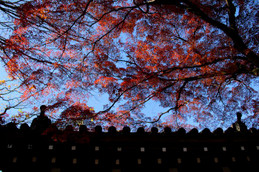 2017年京都 名残りの紅葉・今宮神社